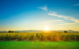 Contre-jour de lever de soleil de vignobles de Bolgheri et de Castagneto Maremma Tus image libre de droits