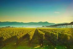 Contre-jour de lever de soleil de vignobles de Bolgheri et de Castagneto Maremma Tus photos libres de droits