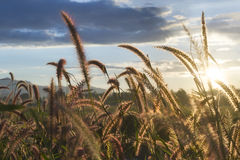 Contre-jour de prairie Photographie stock
