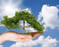 contre l'arbre de ciel de fixation de main Images libres de droits