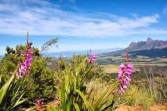 contre le bleu fleurit des montagnes sauvages image libre de droits