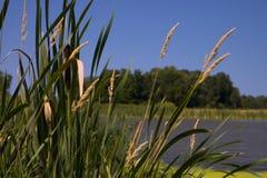 contre le chat couvert arrières verts d'étang de mousse Photo libre de droits