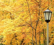 contre le jaune d'arbres de lanterne d'automne Photos stock