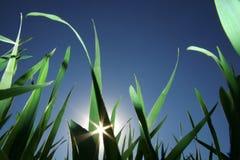 contre le soleil d'herbe photos stock