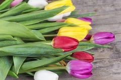contre les jeunes jaunes blancs de source de fleur de concept de fond Photo stock