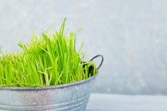 contre les jeunes jaunes blancs de source de fleur de concept de fond Herbe dans le pot de fleurs Photo stock