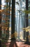 contrejour森林照明设备 库存图片