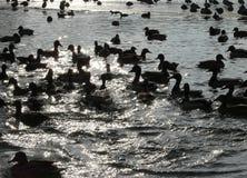 Contrejour Vögel Lizenzfreies Stockbild
