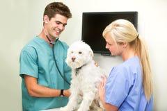 Contrôle de vétérinaire Photos stock