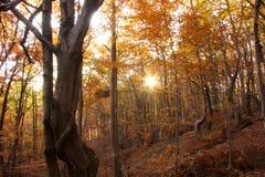 contro il tramonto della foresta di autunno Immagini Stock