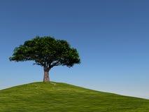 contro l'albero libero blu del cielo della collina Immagini Stock Libere da Diritti