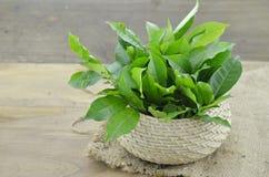 Contro l'invecchiamento del canestro di vimini con le foglie di tè verdi Fotografia Stock Libera da Diritti