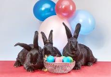 Contro lo sfondo dei palloni sono i coniglietti di bugia vicino alle uova di Pasqua Fotografia Stock Libera da Diritti
