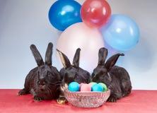 Contro lo sfondo dei palloni sono i coniglietti di bugia vicino alle uova di Pasqua Fotografia Stock