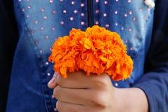 Control amarillo del ramo de las flores de la maravilla de la muchacha de su mano foto de archivo