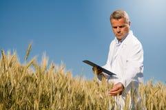 Control de calidad en campo de trigo Imagen de archivo