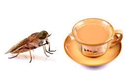 Control de insecto Imagenes de archivo