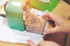Control de la mano de la mujer el lápiz verde del pedazo de la limpieza de los sacapuntas encendido apagado foto de archivo libre de regalías