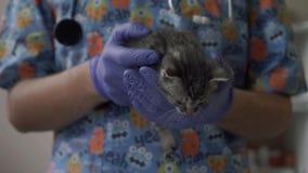 Control veterinario un pequeño gatito en sus brazos metrajes