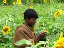 Controlar la cosecha Foto de archivo libre de regalías