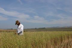 Controlar la cosecha Fotografía de archivo