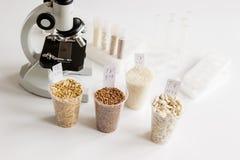 Controle da qualidade de alimento no laboratório ninguém Imagem de Stock