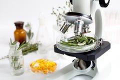 Controle da qualidade de alimento nos alecrins do laboratório fotografia de stock royalty free
