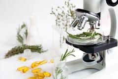 Controle da qualidade de alimento nos alecrins do laboratório imagem de stock royalty free