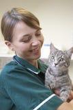 Controle o gato da terra arrendada na cirurgia fotos de stock