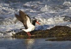 Controle uit Mijn Vleugels Royalty-vrije Stock Fotografie
