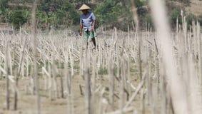 Controleer de voorwaarde van landbouwers in dorpstanamanya Klewor B Royalty-vrije Stock Foto's