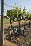 Controles del abastecimiento de agua en viñedo Fotografía de archivo libre de regalías