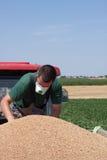 Controllando rimorchio in pieno di grano Immagine Stock