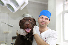 Controllare e cane. Fotografie Stock Libere da Diritti