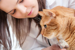 Controllare e gatto Immagine Stock Libera da Diritti