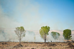 Controlled Burn. A controlled burn in southern Utah royalty free stock photos