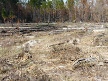 Controlled Burn Area in Forest Royalty Free Stock Photo