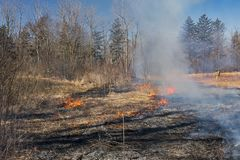 Controlled Burn in a Native Prairie. In Spring Valley Nature Center in Schaumburg, Illinois royalty free stock photography