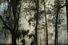 Controlled Burn Smoke. Controlled burn in Florida. Smoke filled forest royalty free stock images