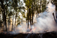 Controlled Fire Burn. A controlled fire burn occurs near Whitfield in the King Valley, Victoria, Australia stock photo