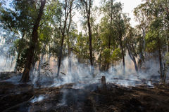 Controlled Fire Burn. A controlled fire burn occurs near Whitfield in the King Valley, Victoria, Australia royalty free stock image