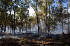 Controlled Fire Burn. A controlled fire burn occurs near Whitfield in the King Valley, Victoria, Australia stock photography