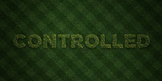 CONTROLLED - fresh Grass letters with flowers and dandelions - 3D rendered royalty free stock image Royalty Free Stock Image