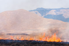 Controlled grass burning near Mount Royalty Free Stock Image