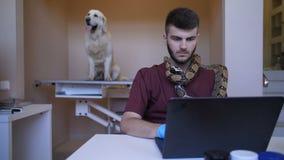 Controlli lavorare al computer portatile con il serpente del pitone sopra il collo archivi video