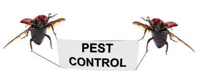 Controllo dei parassiti Fotografia Stock