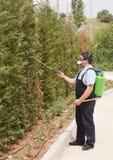 Controllo dei parassiti di spruzzatura degli insetti dell'uomo Fotografie Stock