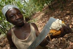 Controllo del cacao Fotografie Stock