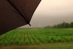 Controllo del raccolto del cereale nella pioggia immagine stock