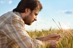 Controllo dell'agricoltore il suo campo di coltivazione del grano Immagine Stock Libera da Diritti